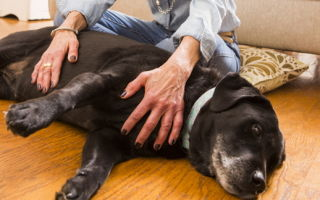 Marie Roberts says her dog Lilly has benefited from Reiki healing sessions..