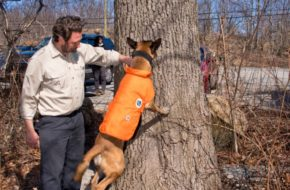 conservation dogs