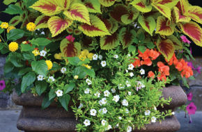 An enormous pot stuffed with variegated coleus.