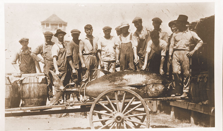 Workers for the Star Fish Company, a pound-fishing operation in Manasquan, admire a hefty catch in a photo dated June 20, 1923.