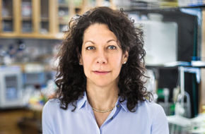 "In her Princeton lab, Bonnie Bassler has identified ""chemical words"" that bacteria use to work on collective tasks, like launching an infection."