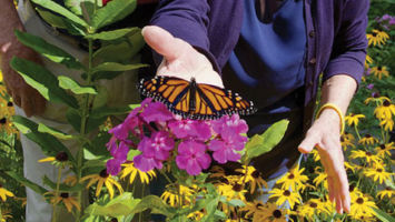 Peter and Kathleen Palmer admire a monarch butterfly in their garden in Bernardsville.