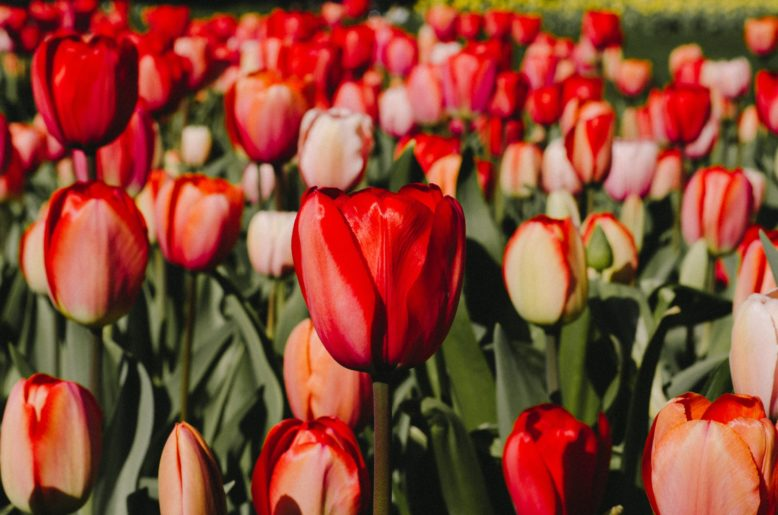 4 Ways To Safely Enjoy Spring Blooms This Year New Jersey Monthly