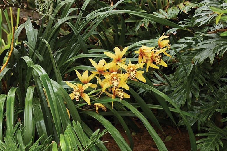 duke farms orchid range Hillsborough