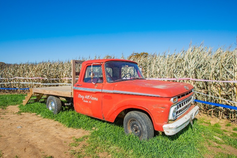 An old red truck at Stony Hill Farms.