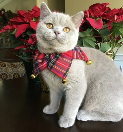 Cutest Cat Contest Winner